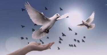 kutsal ilişki
